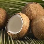 Kokosnussmilchpulver, Kokosnusspulver, Kokoscreme