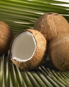 Eine unserer besonderen Kompetenz: Kokosnusserzeugnisse!